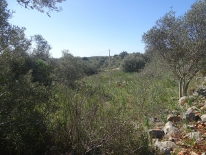 Property Ref: 13723 - S. B. Messines, Algarve, Portugal